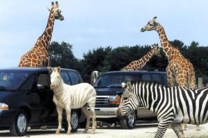 Photo courtesy of Ohio Safari Wildlife Park